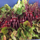Beets, with greens 1 lb $6