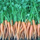 Carrots 1 lb $5