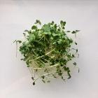 Broccoli Shoots 70 grams $9