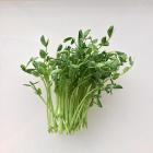 Pea Shoots 125 grams $7