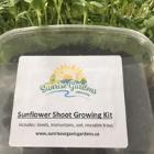 Grow-Kit Sunflower Shoots $5