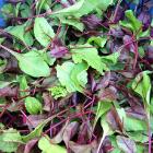 Mixed Greens 125 grams $6